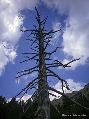 (Marcosbamala) Tags: naturaleza pirineo pirineos valldecarança forest foto fotografia photo photograph photography shooting shoot tree arbre arbol naturalesa nature