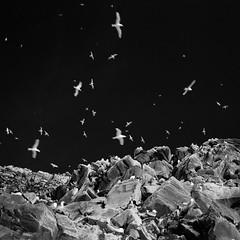 Vardø, Norway (Joachimsen Photography) Tags: grayscale nature monochrome blackwhite mediumformat 6x6 analog finnmark vardø varanger mamiya6mf filmisnotdead ilfordphoto