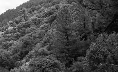 CanonEOS1n_Kodak2238_D76_13min241 (Michael Bartosek) Tags: film 35mm 35mmfilm bw blackandwhite