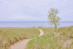 023700 A Spring Morning With Gentle Breezes And Soft Edges (David G. Hoffman) Tags: lake lakeshore lakemichigan tree path beach beachgrass horizon clouds