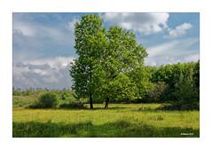 FRÜHLINGSBILD... (Babaou) Tags: niederlande nederland maasduinen ravenvennen naturgebiet dxopl limburgnoord grenze lente frühling limburgslandschap
