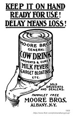 1908 moore bros. cow drink (albany group archive) Tags: albany ny history 1908 moore bros cow drink