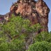 Trees and Peaks of Volcanic Remains in Big Bend National Park