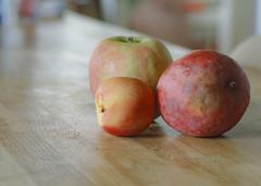 Fruit (Dan John Cumberland) Tags: kodak ektachrome e100 100 slide pentax pentaxm smc 85mm f2 fruit home scan plustek 7400 optifilm