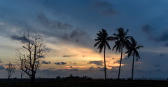 End of the Day (TigerPal) Tags: indonesia belitung tropics vacation trip travel twilight bluehour sunset sky silhouette silhouettephotography shimmer tanjungpadang evening