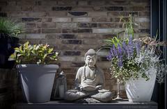 Meditatiehoekje (Pieter Musterd) Tags: boeddha buhdda terras meditatie meditation flowers candle flowerpot grass pietermusterd musterd canon pmusterdziggonl nederland holland nl canon5dmarkii canon5d denhaag 'sgravenhage thehague lahaye