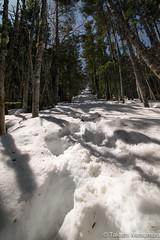 Still in the Winter (takashi_matsumura) Tags: winter snow mountain path mt kobushi chichibu saitama ngc japan nikon d5300 甲武信岳 雪山 afp dx nikkor 1020mm f4556g vr