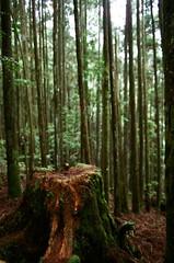 馬崙山 (紅色小草) Tags: nikonf3hp fujifilm400 28mmf20 50mmf14 20190505