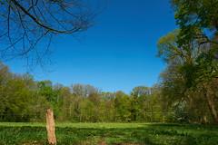 Achterhoek (Jos Mecklenfeld) Tags: sonya6000 sonyilce6000 sonyepz1650mm selp1650 achterhoek spring frühling lente niederlande nederland thilgelo landscape landschaft landschap winterswijk gelderland netherlands