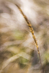 Air (Elke Bosma-Prins) Tags: macromondays air elements grass windy fourelements movement bokeh denmark sjaelland lensbaby sweet50mm