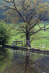 Reflective Tree (jdathebowler Thanks for 4 Million + views.) Tags: reflectivetree leedsliverpoolcanal landscape reflection trees deciduoustrees waterside water waterway canalandrivertrust canal countryside countryview countryscene ruralsetting ruralscene farmland