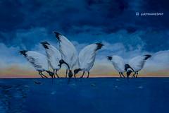 australian ibis (artwork) (Greg M Rohan) Tags: lucyhughesart bondibeachstreetart bondibeach bondi blue water birds australianibis ibis streetart artist artwork australia sydney art 2019 d750 nikon nikkor