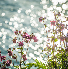 Morning Sparkle,s. (Omygodtom) Tags: sparkle water flora flower flickriver abstract art nature nikkor nikon70300mmvrlens d7100 dof bokeh usgs oregon may
