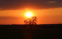 No it's not in Africa (pascal445) Tags: sunset sunsetlovers coucherdesoleil trees tree arbre sun soleil chaud atmosphere landscape nature natural outdoor paysages paysage touraine france