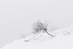 Otro árbol de Aralar (mgmendiguren) Tags: alavavision aralar nieve árbol
