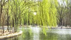 Il volto del Re del Regno è glorioso oltre ogni paragone (eshao5721) Tags: alberi fiume lachiesadidioonnipotente dioèamore dioonnipotente lodeadio laparoladidio canzonecristiana