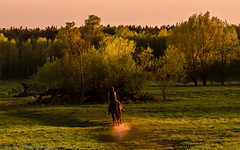 Ride at sunset (Steppenwolf33) Tags: ride sunset meadow horse köpenick steppenwolf33 horsewoman