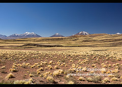 Volcanoes on the high altiplano, Atacama Desert, Chile (jitenshaman) Tags: travel worldtravel destination destinations southamerica latinamerica chile atacama sanpedrodeatacama nortegrande desert altiplano plains mountain mountains volcano volcanoes peak landscape landscapes scenery nature outdoors natural view vista colours colors colour color arid dry deserts valley naturallandscape naturesbeauty beautiful desolate stark desertscape wilderness volcanic colourful grass green lush empty volcanos