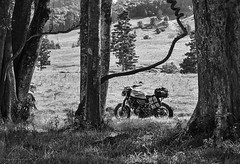 rest in the paddock (gnarlydog) Tags: australia motorcycle yamaha xsr700 rural adaptedlens manualfocus vintagelens canontv1650mmf14 highcontrast sunny paddock grass trees monochrome blackandwhite
