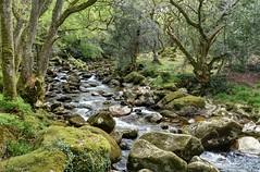 The River Plym near Shaugh Prior, Dartmoor (Baz Richardson (now away for a few days)) Tags: devon dartmoor riverplym dewerstone shaughprior rapids rocks rivers