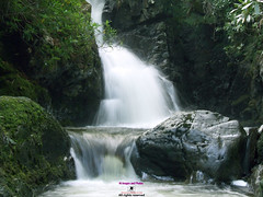 Tollymore cascade on the Shimna river (Photographs and Images of Northern Ireland) Tags: tollymore forest park walks red squirell deer waterfalls shimna caravans parking mourne mountains newcastle sunsets cascades hermits lodge