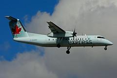 C-GABO (Air Canada express - JAZZ) (Steelhead 2010) Tags: aircanada aircanadaexpress jazz dhc8 dhc8300 dehavillandcanada yyz creg cgabo