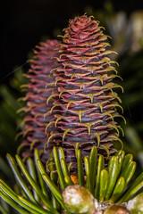 Delicate Threads (Mark Wasteney) Tags: happywebwednesday hww web threads pinecone