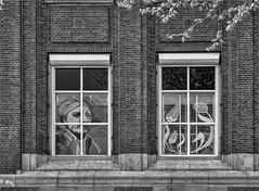 Fotothema: Fassaden in SW / Photo Theme: Facades in SW (ludwigrudolf232) Tags: einfarbig fenster fassaden fensterdeko