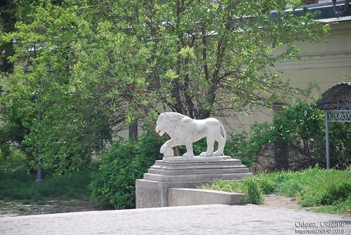 Одеські леви, Одеса, травень 2019 InterNetri Ukraine 229