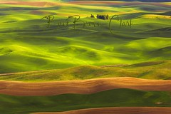 undulation (Beve Brown-Clark) Tags: country easternwashington farm farming farmland farms fields green hills light nature pacificnorthwest palouse photography rollinghills rural sewashignton spring springwheat springtime steptoebutte sun thepalouse washington washingtonstate wheat wheatcounty wheatfields whitmancounty ©bevebrownclark usa