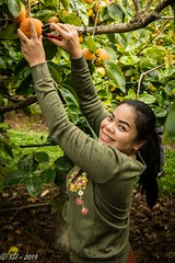 ISI-80D-20190504-1576.3-1576_512x768 (Ian Stewart1) Tags: nong persimmons