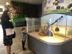 Nova Scotia Museum of Natural History (brownpau) Tags: iphonex canada novascotia halifax novascotiamuseumofnaturalhistory naturalhistory museum gus tortoise amykow amyandezra ezraordo ezra