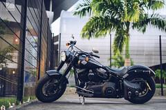 Harley ! (Yannick Charifou Photography ©) Tags: nikon d850 charifou dof bokeh wide open prime moto bike biker harley davidson sigma50mm14art noir black mat matte
