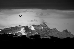 Free as a bird (stefankamert) Tags: bird mountain schweiz switzerland säntis snow clouds landscape blackandwhite blackwhite flying beatles freeasabird sky trees sun ice stefankamert