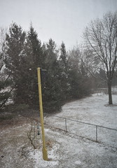 Winter Strikes Again (Pictures by Ann) Tags: springsnow snow flurries backyard trees pinetrees