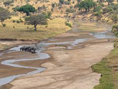 Elephants in the river, Tarangire, Tanzania (Amdelsur) Tags: continentsetpays taranguire tanzanie afrique africa tz tza tanzania régiondarusha