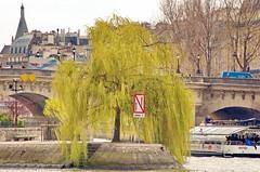 436 Paris en Mars 2019 - la Seine, le saule pleureur au bout de l'Île de la Cité, le Pont Neuf (paspog) Tags: paris ptance seine mars march märz 2019 îledelacité pontneuf saulepleureur