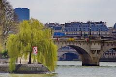 435 Paris en Mars 2019 - la Seine, le saule pleureur au bout de l'Île de la Cité, le Pont Neuf (paspog) Tags: paris ptance seine mars march märz 2019 îledelacité pontneuf saulepleureur