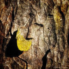 Bark Moods (Dave Snowdon (Wipeout Dave)) Tags: davidsnowdonphotography intothewood abstract naturalabstract bark tree lichen pattern iphone iphonese