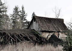 Tired Old Barn (danbriscoephotography) Tags: old barn falling down dilapidated tired homestead historic farm decay sad fallen picturesque history ranch grass trees nikon d7000