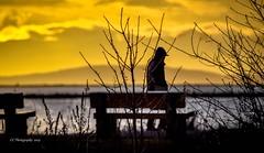 Stranger Danger ! (Christie : Colour & Light Collection) Tags: sunset sundown strolling walking walker person silhouette skylight sky yellow clouds nikkor nikon dslr photography outdoors mood bench park bc canada treesilhouette branchsilhouette branches parkbench water river fraserriver britishcolumbia strangerdanger danger stalker