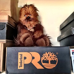"""MY Chewbacca """"Chewie"""" Wookiee Plush chilling up in my closet...can't wait to bring him with me to work. 😍😁😇 (05/09/19) #disney #comicimages #starwars #chewbacca #chewie #wookiee #plush #mychewie #mybuddy (iTeodoro1991) Tags: disney comicimages starwars chewbacca chewie wookiee plush mychewie mybuddy"""