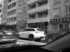 Tigers wood (streetravioli) Tags: street photography flushing ny new york nyc tiger woods