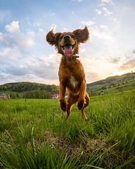 It's Friday, folks! Make it count and have a great weekend! • • • • • #adventuredog #hikingwithdogs #campingwithdogs #goprohero7black #dogsonadventures #traildog #backcountrypaws #ruffwear #doghikers #mydogismy #adventurepup #adventurewithdogs #friday #hi (watson_the_adventure_dog) Tags: it's friday folks make it count have great weekend • adventuredog hikingwithdogs campingwithdogs goprohero7black dogsonadventures traildog backcountrypaws ruffwear doghikers mydogismy adventurepup adventurewithdogs hikingdog bieszczadymountains hikingdogsofinstagram dogsofig weeklyfluff instapuppies dogsrule bieszczady dogsofinstagram doglover discoverpoland happypet gopro springersofinstagram