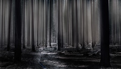 Ethereal (dmunro100) Tags: abstract blur forest kuitpo southaustralia mood