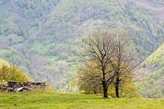 Sur les pentes de Fonta (Ariège) (PierreG_09) Tags: ariège pyrénées pirineos couserans occitanie midipyrénées fonta laserre seix