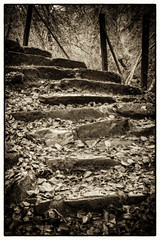 woodland steps | The Birks | Aberfeldy | Perthshire (Weir View) Tags: photo intimatelandscape blackwhite autumn thebirks aberfeldy perthshire scotland woodland steps leaves