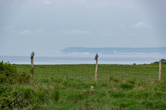 Enjoying the View (Shastajak) Tags: fence pigeons beachyhead eastbourne eastsussex hastingscountrypark fencefriday