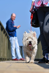 Bobby, Ballycastle, April 2019 (nathanlawrence785) Tags: northern ireland uk ni ulster spring summer goose birds wildlife antrim carrickfergus boats harbour family dogs cars