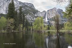BK0_1346 (b kwankin) Tags: california yosemitefalls yosemitenationalpark